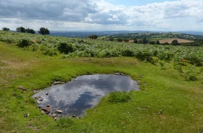 A peaty pool on the path