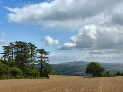 Trees and Titterstone