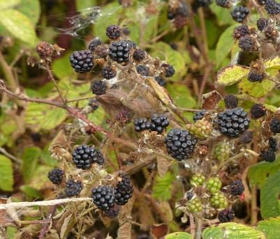 Autumn crop