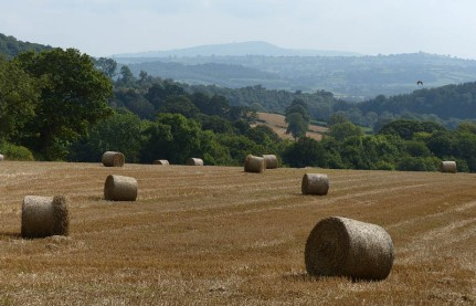 Bales, a buzzard and Titterstone Clee