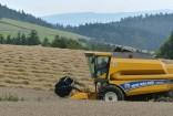 Hope Dale harvest