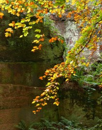 Beech and old stone