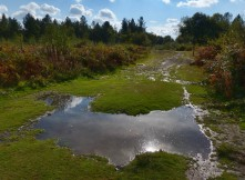 Puddle on the path