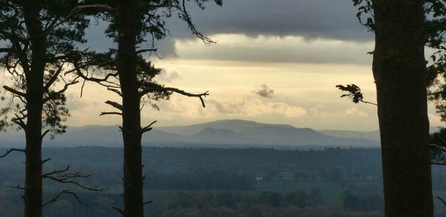 South Shropshire through the trees