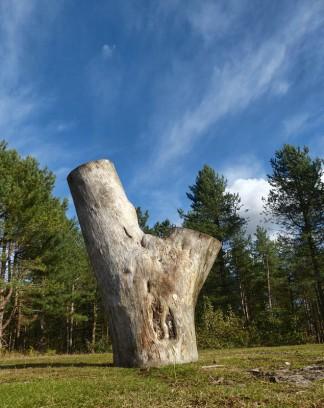 Stumpture