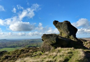 The Roaches