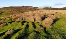 Grasses and Abdon Burf