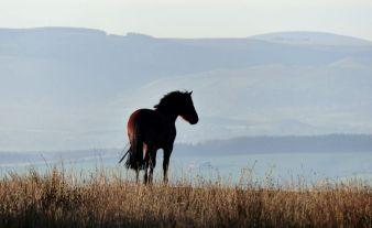 Hill pony