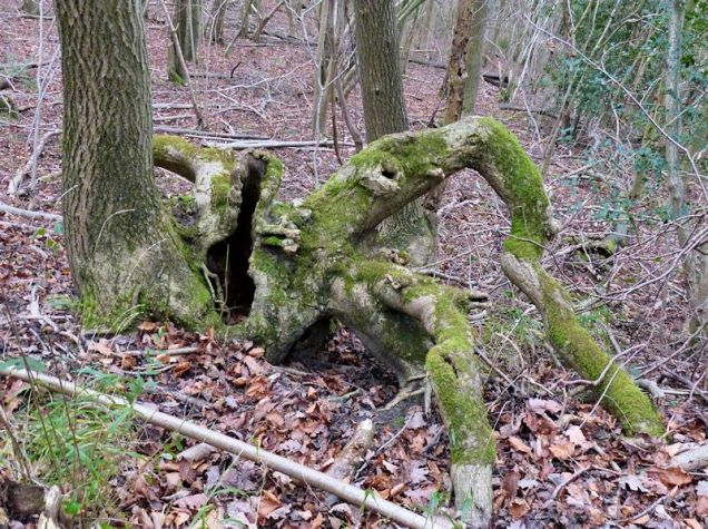 Spider roots