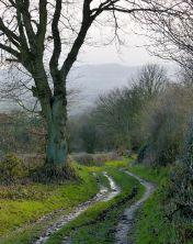 A pleasant lane