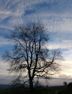 Feathery sky