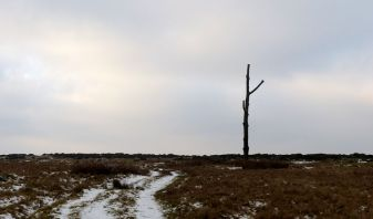 The three-forked pole