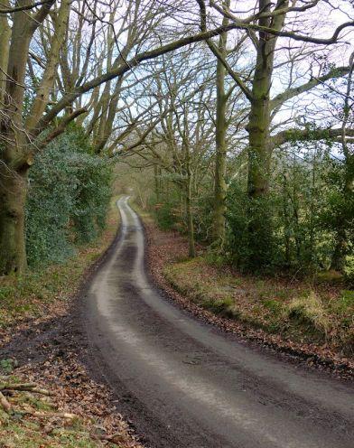 Shirlett lane