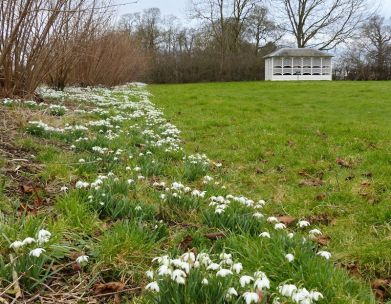 Snowdrops and bee house