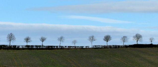 Sociable trees