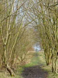 A tree-lined way