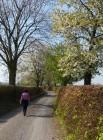 Blossom beside the lane