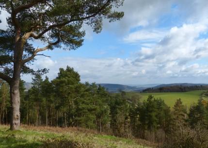 Wart Hill landscape