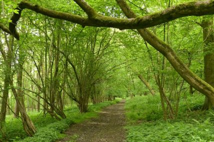 Piner's Coppice