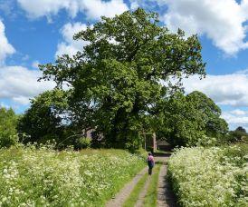 Benthall lane
