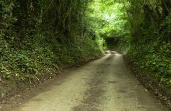 Wigwig lane