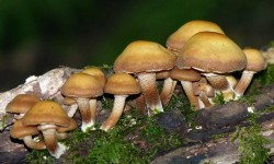 Toadstools on log