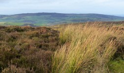Reeds and Stiperstones