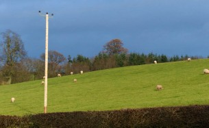 Sheepy field
