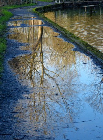 Coalport towpath reflections