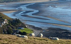 Sheep and shapes in the sands