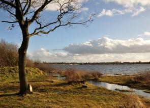 Sodden shore
