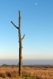 Three-forked pole and the moon