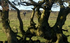 Tree and pantomime horse