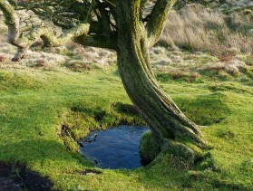 Hawthorn and pool