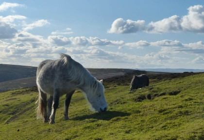 Ponies at Packetstone