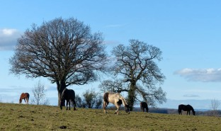A field of horses