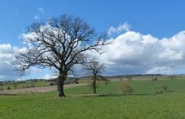 Spring fields, winter trees