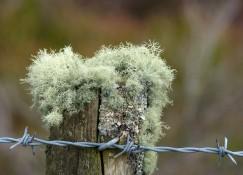 Hairy post