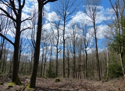 Open woodland