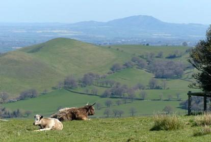 The Hollies - Wrekin view