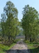 Birch avenue