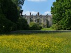Benthall buttercups