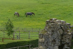 Racehorse country