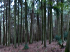 Forest impressions