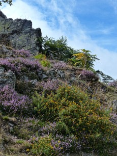 Heather, gorse and blue sky