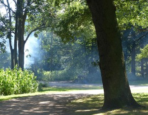 Rings of smoke through the trees