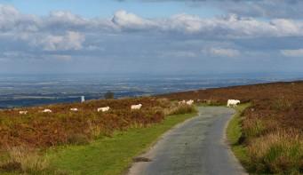 Sheep may safely cross