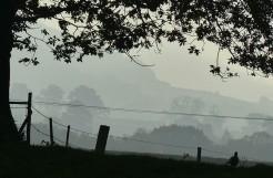 Mist along the Edge