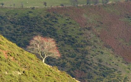 Hillside with tree