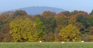 Leaves and Wrekin